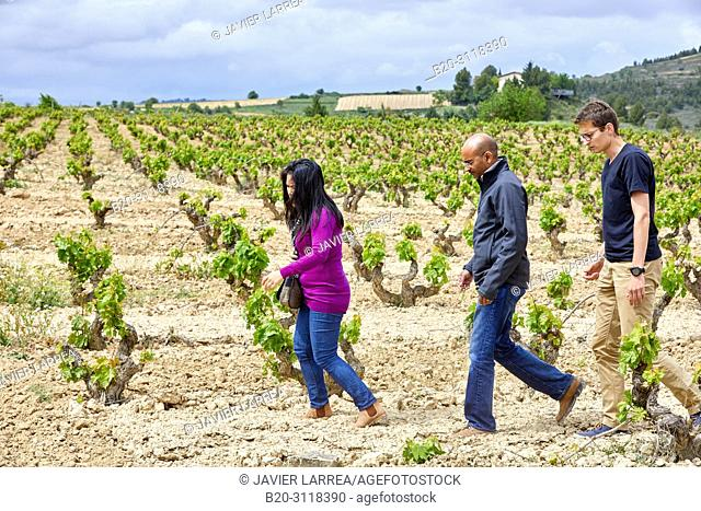 Guide with couple of tourists, Vineyard, Elciego, Rioja Alavesa, Araba, Basque Country, Spain, Europe