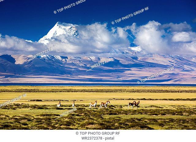 Tibet Ali Gar Burang Gurla Mandhata