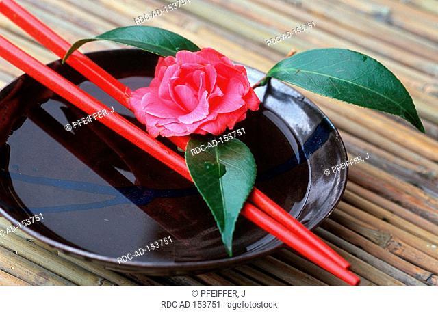 Camellia  'Debbie' with bowl and chopsticks Camellia japonica