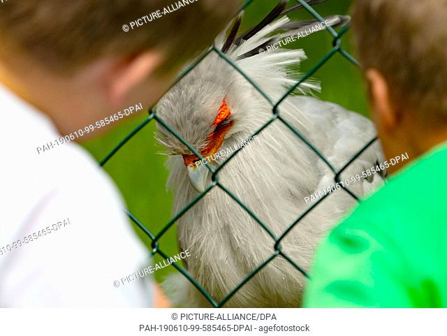 10 June 2019, Berlin: Two children sit in front of a fence in a zoo enclosure, looking for eye contact with a secretary (bird). Photo: Paul Zinken/dpa
