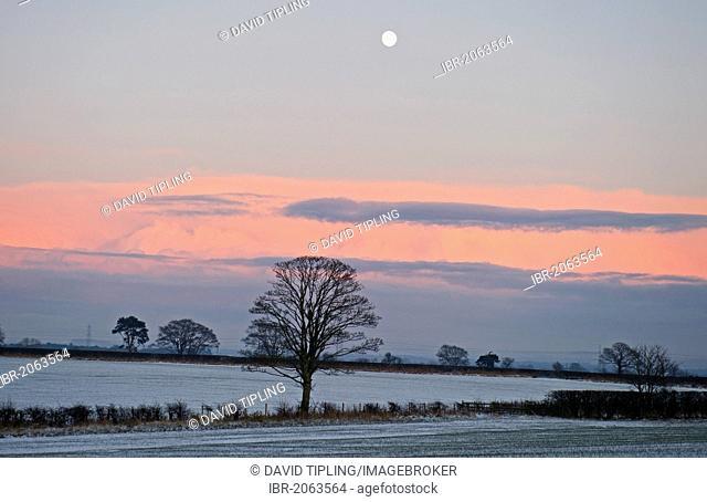 View across arable farmland at dusk in winter, near Gretna, Dumfries, Scotland, United Kingdom, Europe