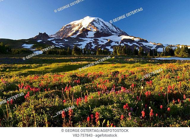 Mt Rainier from Spray Park, Mt Rainier National Park, Washington, USA