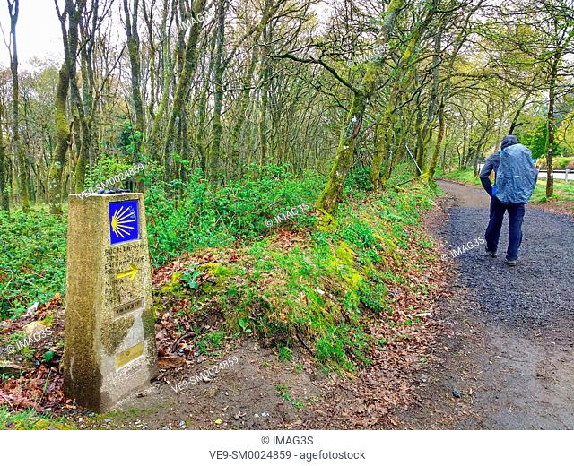 A pilgrim walks in a track of the French Way that leads to Santiago de Compostela, near Palas de Rei, Way of Saint James, Lugo province, Spain
