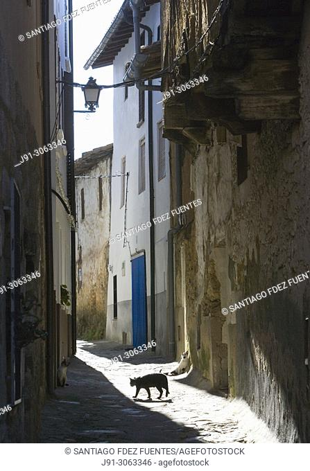 Cat on narrow street. Valverde de la Vera. Caceres Province, Extremadura, Spain