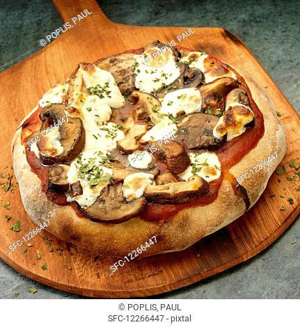 Rustic Pizza with Shitake and Crimini Mushrooms and mozzarella