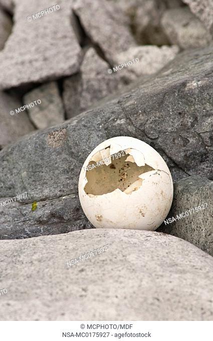 Cracked egg on Petermann Island Antarctica
