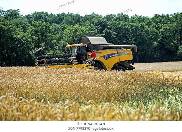 Mähdrescher New Holland CX8080 bei der Winterweizenernte, Kanton Genf, Schweiz / Combine Harvester New Holland CX8080 harvesting winter wheat, Canton Geneva