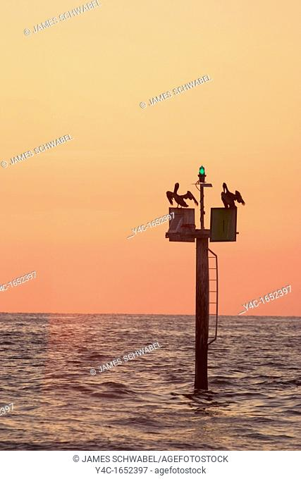 Pelicans at sunset on navigation marker, Gulf of Mexico, Venice, Florida