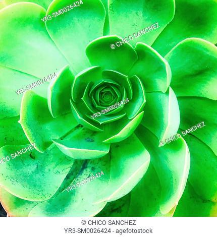 A green cactus in Coyoacan, Mexico