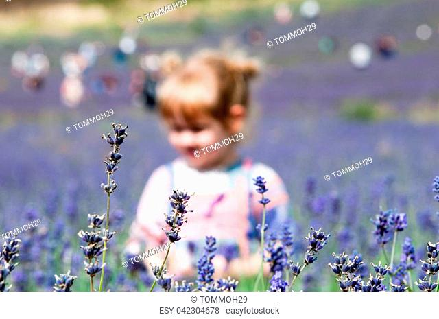 Child picking flowers in a meadow. She is a girl in a lavender field