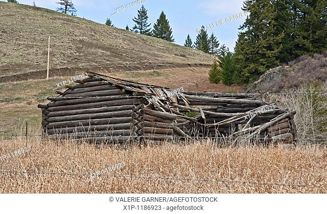 This photo is an old turn of the century log cabin homestead located near Molson, WA on Fletcher Hill that is debilitated with the roof in process of caving in...