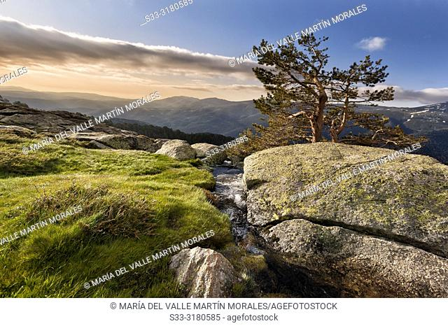 Stream and pine at Penialara National Park early in the morning. Sierra de Guadarrama. Madrid. Spain