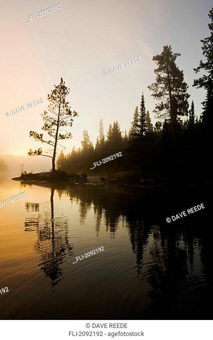 Tree silhouettes by rushing river, kenora ontario canada