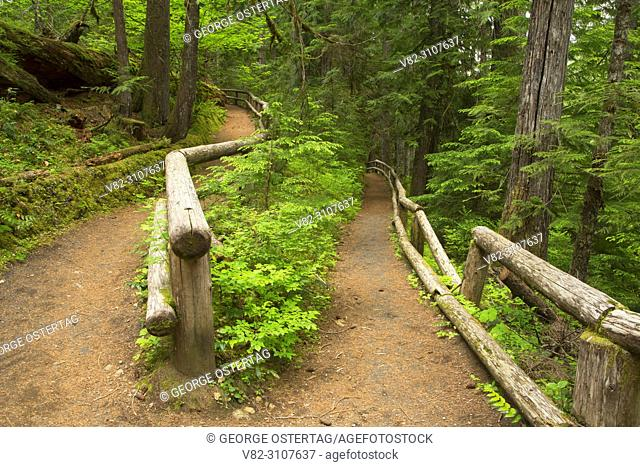 Waterfall Trail, McKenzie Wild and Scenic River, Willamette National Forest, Oregon