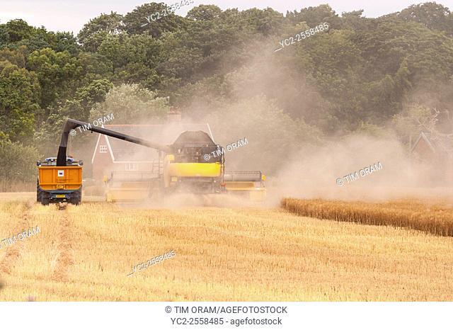 Harvesting oilseed rape in Broome , Bungay , Suffolk , England , Uk