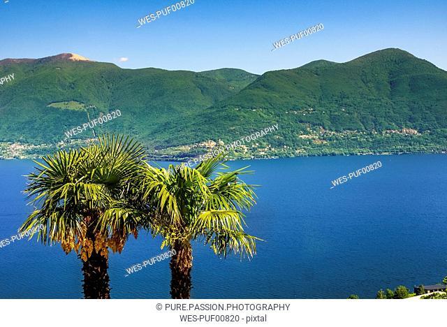 Switzerland, Ticino, Lago Maggiore, palms