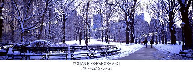 Winter Central Park NY USA