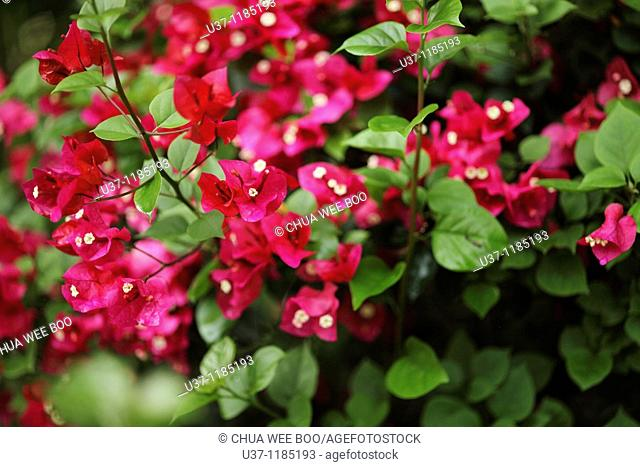 Leaves & flowers