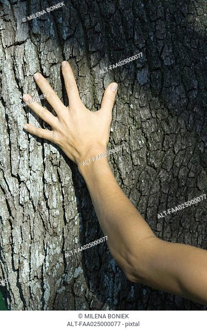 Woman touching tree trunk, cropped