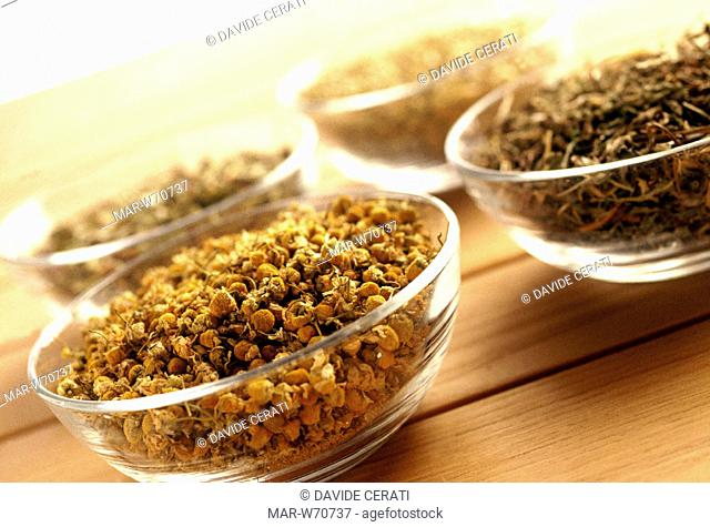 herbs for infusions