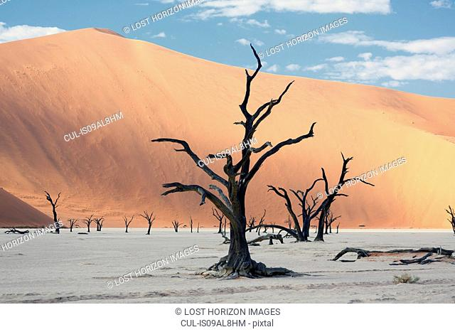 Silhouetted dead trees on clay pan, Deaddvlei, Sossusvlei National Park, Namibia