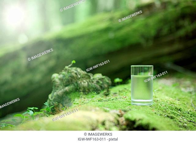 Glass of water on moss