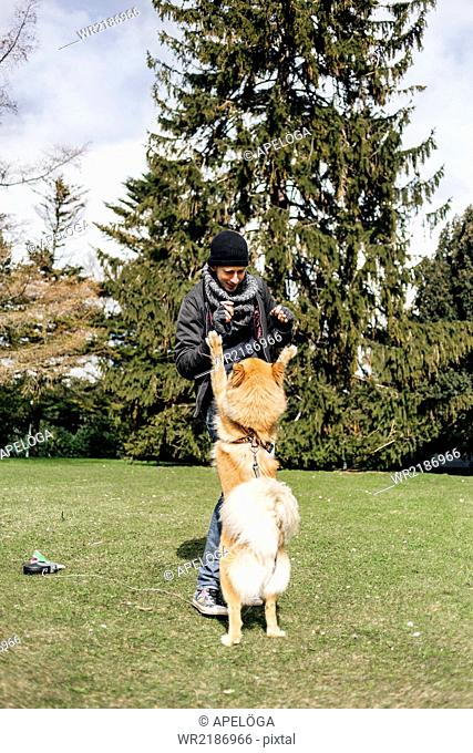 Young man playing with Eurasier in park