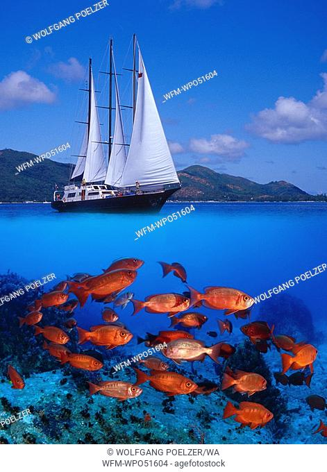 sailboat and school of red fish, Priacanthus hamrur, Indian Ocean, Seychelles