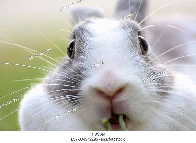 Rabbits are small mammals. Bunny is a colloquial name for a rabbit