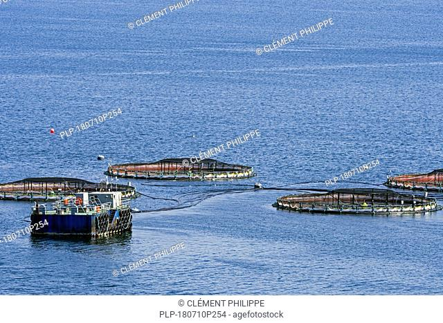 Aquaculture installation / sea cages / sea pens / fish cages at salmon farm in Laxo Voe, Vidlin on the Mainland, Shetland Islands, Scotland, UK