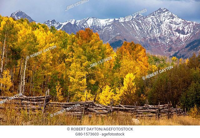Aspens peaking in the San Juan Mountains of Colorado