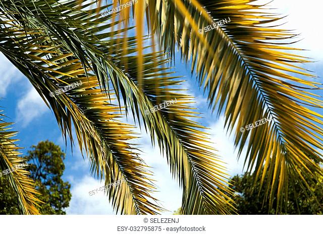 Palm trees and cypresses grow in park of the southern city on pleasure to people
