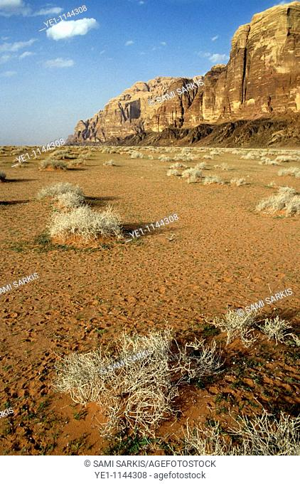 Sparse tussock and rock formations in the Wadi Rum desert, Jordan