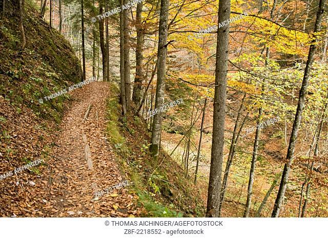 Nature reserve Ötschergraben, Mitterbach am Erlaufsee, Niederösterreich, Austria