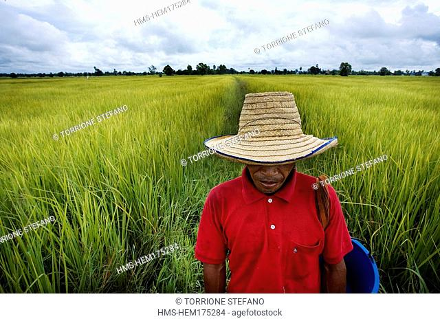 Thailand, Northeastern Thailand, Isan region, a farmer at sowing time in the rice fields near the town of Surin