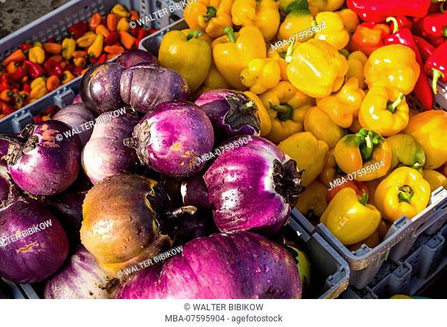 Canada, Quebec, Montreal, Little Italy, Marche Jean Talon market, autumn, aubergines