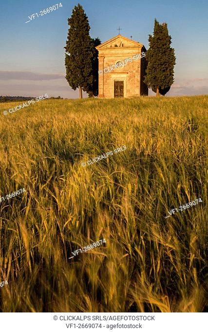 wheat in front of the chapel of Vitaleta in Val d'Orcia,tuscany, italy,europe