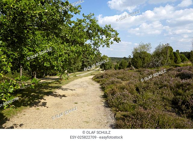 A hike path through the Luneburg Heath (Germany) leads from Wilsede to Egestorf (Lower Saxony, Rural District Harburg)