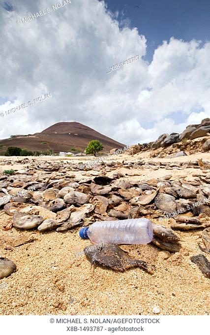 View of massive die-off of black triggerfish on the beach on Ascension Island in the southern tropical Atlantic Ocean  MORE INFO Ascension Island is a remote...