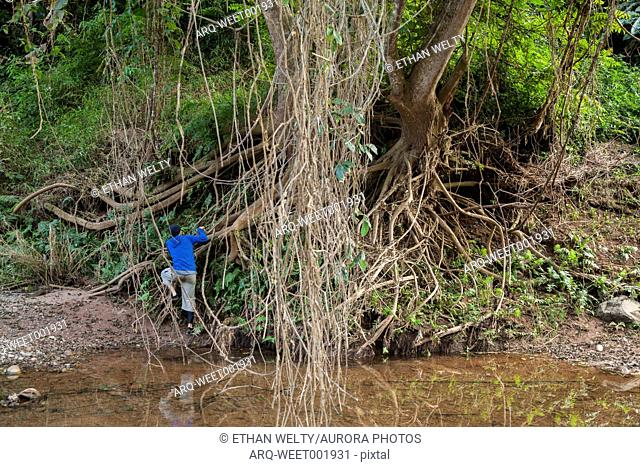 Robert Hahn climbs the roots of a tree on the shore of the Nam Ou River in Phou Den Din National Protected Area, Laos