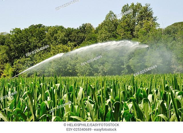 Water sprinkler installation in a field of maize in Dordogne in France