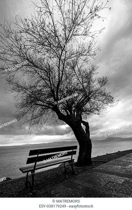 Bench and tree silhouette on the lake