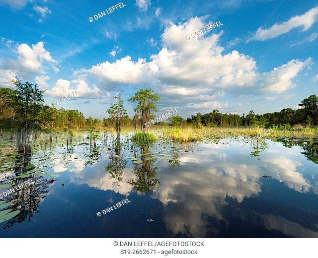 Okefenokee Swamp Reflection
