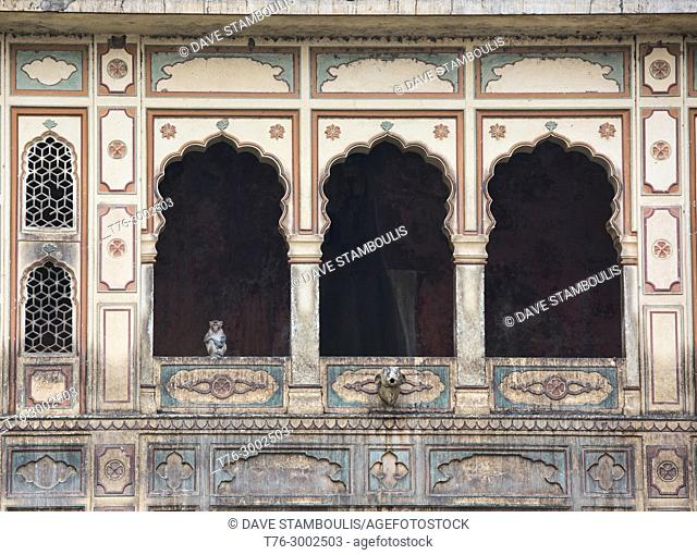 Monkey in the window at the ancient Galtaji Monkey Temple, Jaipur, India