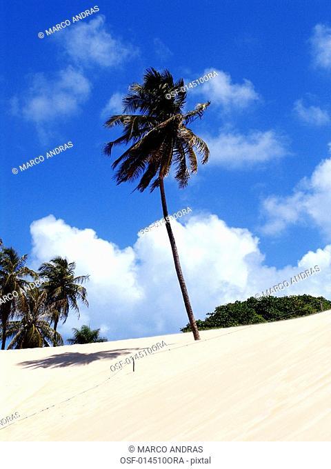 palm green vegetation trees at jenipabu beach