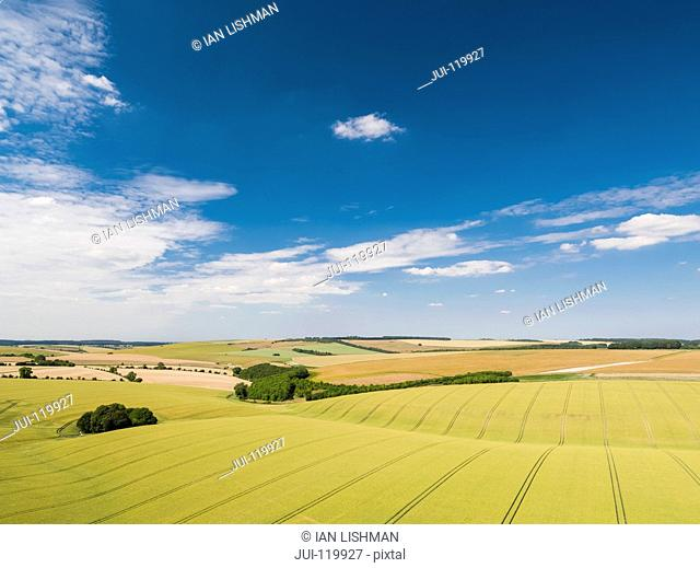 Aerial view of ripening wheat crop fields on farm under blue sky and white clouds on farm