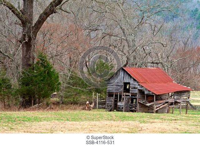 Abandoned barn and trees, Arkansas, USA