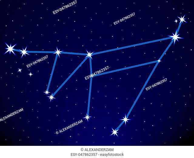 Capricornus constellation on the starry sky