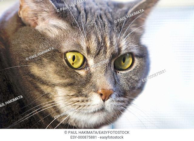 Cat's green eyes