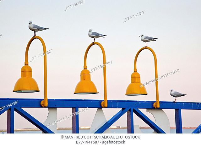 Australia, Northern Territory, Darwin, sae gulls on Stokes Hill Wharf